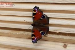 64-odwiedziny-motyla-na-placu-budowy
