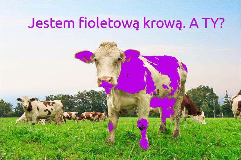 Fioletowa krowa